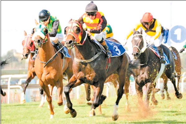 turffontein horse racing tips